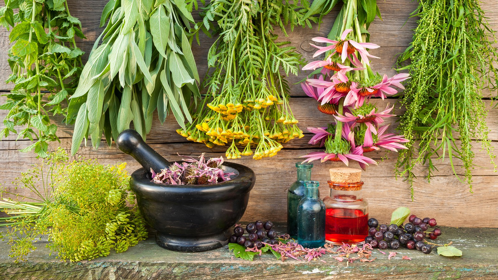 Online Certificate Program Or Ceu Broker Credits In Herbal Medicine 101 Body Wellness